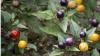 കണ്ണൂര് കലക്ടറേറ്റ് പരിസരത്ത് പച്ചക്കറിതോട്ടമൊരുങ്ങുന്നു, അഴുക്കില് നിന്നും അഴകിലേക്ക്