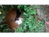 നാടുചുറ്റിയ കാട്ടുപോത്ത് കിണറ്റില് വീണു: 'അടി'തെറ്റിയ കാട്ടുപോത്തിനെ കാണാന്  ജനപ്രവാഹം!! ഒടുവില് രക്ഷപ്പെടുത്തി!!