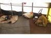 ചിന്നക്കനാലില് കുടില്കെട്ടി സമരം 27-ാം ദിനത്തില്: കയ്യേറിയ സ്ഥലത്ത് വീട് നിര്മ്മിക്കുമെന്ന് തോട്ടം തൊഴിലാളികള്, കുടില് കെട്ടി സമരം ചെയ്യുന്നത് നാന്നൂറോളം തൊഴിലാളികള്!!
