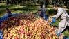 അതിർത്തിയിലെ ആപ്പിൾതോട്ടങ്ങൾ ലക്ഷ്യംവെച്ച് തീവ്രവാദികൾ; വിൽപ്പന തടയാൻ ആപ്പിളുകൾ കൂട്ടത്തോടെ കത്തിക്കുന്നു, ഭയന്ന് വിറച്ച് ഗ്രാമീണർ