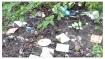 പനംകുട്ടി വനമേഖലയില് മാലിന്യ നിക്ഷേപം പതിവാകുന്നു, പാംബ്ല ജലാശയത്തെയും  ബാധിക്കുന്നു...!!!