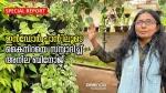 ഇൻഡോർ പ്ലാൻ്റിലൂടെ കൈനിറയെ സമ്പാദിച്ച് അനില ബിനോജ്