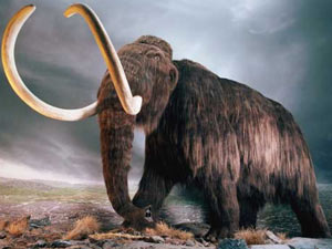 Extinct Woolly Mammoth To Be Recreated Aid0032