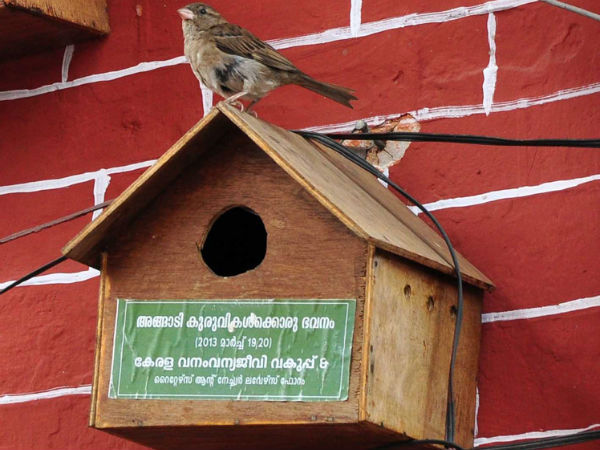 Minister Provided Nests House Sparrows Started Living