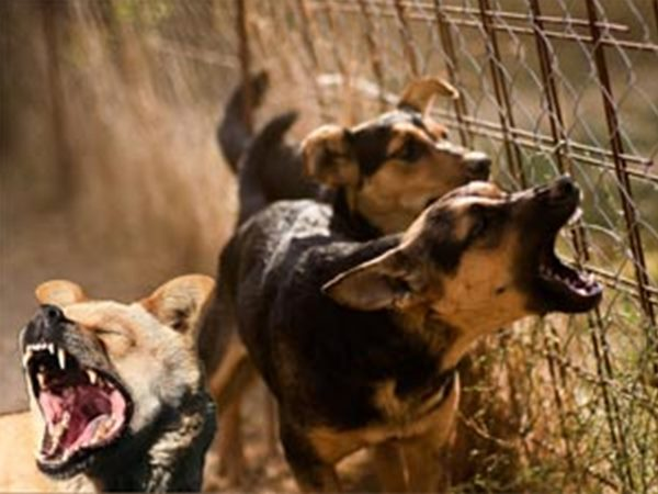 Woman Migrant Worker Mauled By Stray Dog In Thalassery