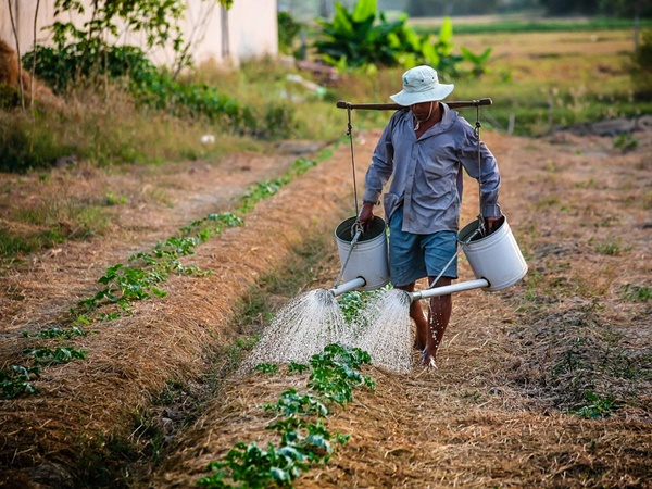 Farmers Suffer As 54 Districts Southern States Face Acute Water Shortage