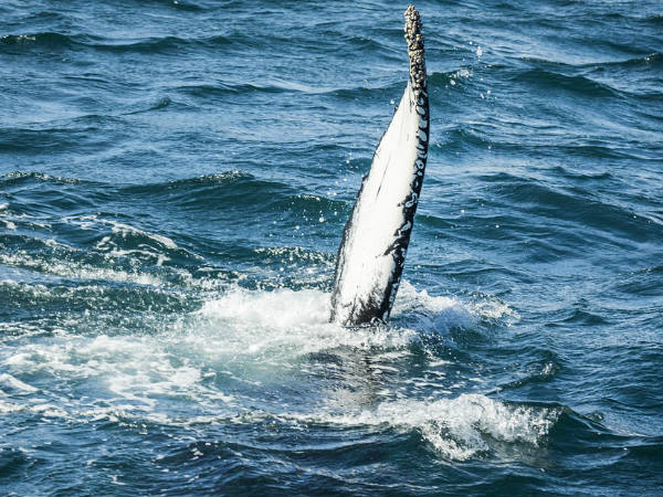 Omani Fishermen Stumble Upon 80kg Of Whale Vomit Worth 2 5 Million
