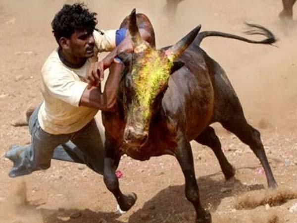 ജെല്ലിക്കെട്ട്:  തമിഴ് പ്രതിഷേധത്തിന് താല്ക്കാലിക ആശ്വാസം, ജെല്ലിക്കെട്ട്  ബില് പാസാക്കി
