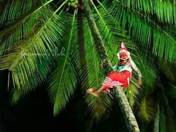 തെയ്യം കലാകാരന് തെങ്ങിൽ നിന്ന് വീണ് ഗുരുതര പരിക്ക് !!! ഞെട്ടലോടെ ഭക്തർ... വീഡിയോ