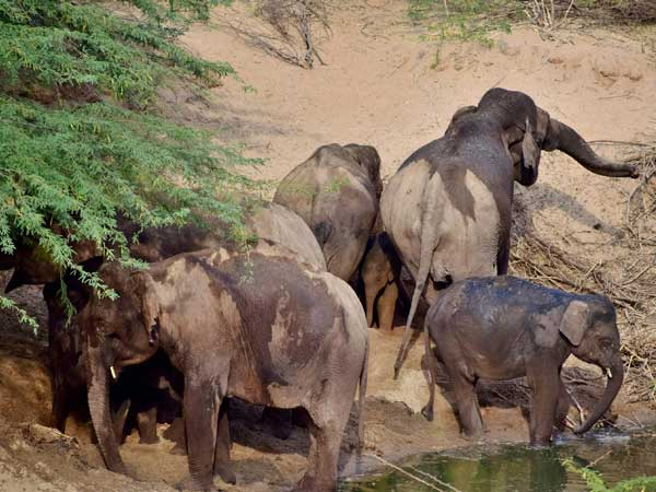 Wild Elephants Arrived Near Pampady Nehru College