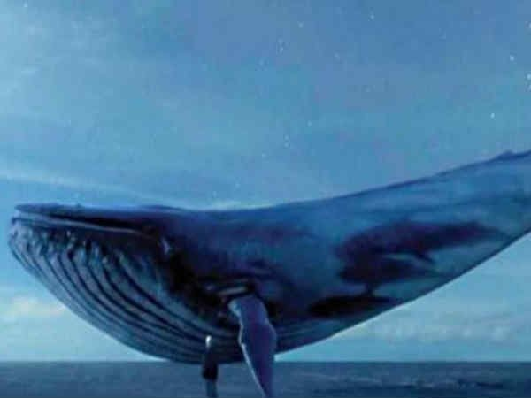 bluewhale-0