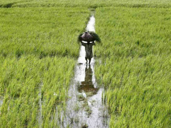 Issacs Crucial Announcments For Agrarian Sector