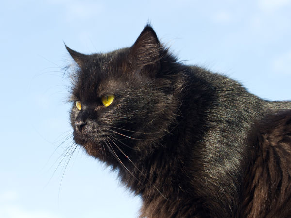 Black Cats Superstition Behind Them
