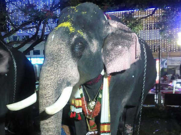 Thiruvampadi Shivsunder Elephant Passes Away