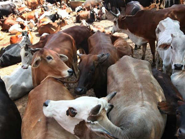 Convicted In Jharkhand In Cow Vigilantism Murder Case