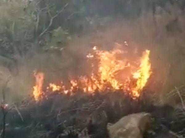 Theni Kurangini Forest Fire Death Toll Seventeen