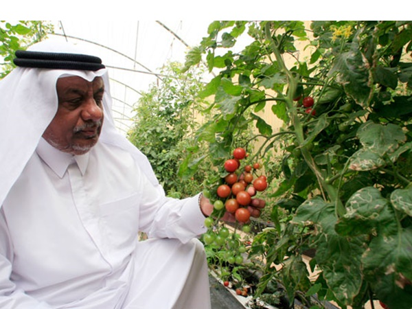 Qatar Comes Up With Five Year Plan