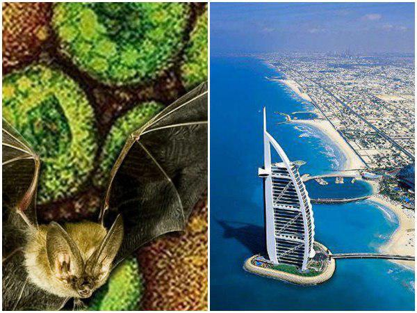 Uae Bahrain Consulates In Issues Health Advisory For Nipah Outbreak