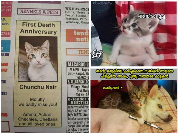 Social Media Trolls On Newspaper Advertisement Of A Cat Named Chunchu Nair