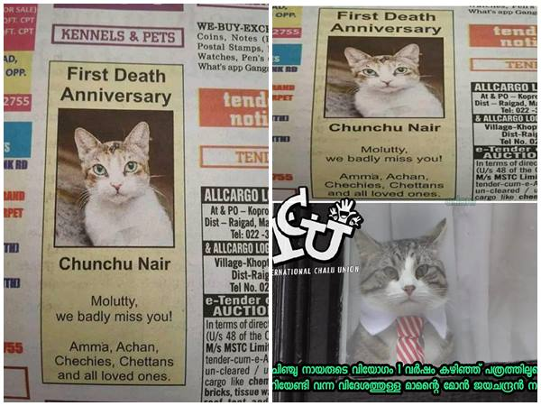 Family Owned The Pet Cat Chunchu Nair Reacts About The Trolls On First Death Anniversary Ad