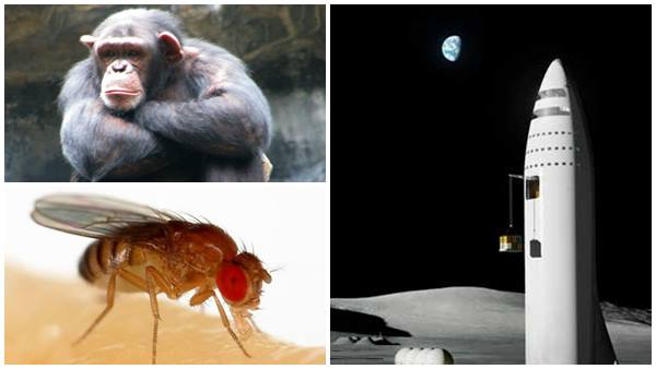 Who Reached The Space First Humans Or Other Animals