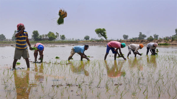 Three Challenges Await Indian Farmers This Harvesting Season