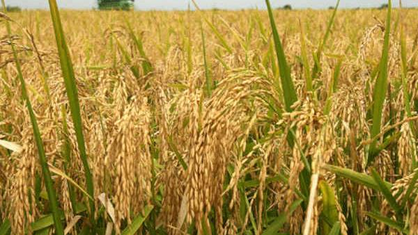 Things To Know About Agriculture Sector In Kerala