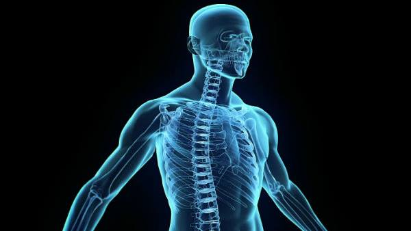 Things To Know About Human Body