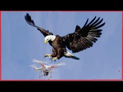 Terrorists Are Building Drones France Is Destroying Them With Eagles