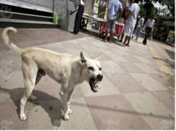 Stray Dog Feeds On Infants Corpse Inside Hospital Premises In Odisha