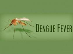 Dengue Fever Spreads In Trivandrum