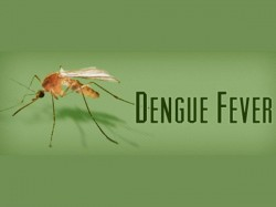 Dengue Fever Outbreak Hits 600 In Trivandrum