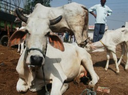 Mob Attacked Officers Trying Arrest Three Cow Slaughter