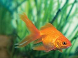 Dont Keep Fish In Aquarium Said Environmental Ministry