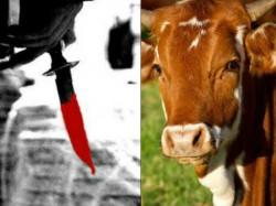 Should Hang People Who Eat Beef Sadhvi In Goa