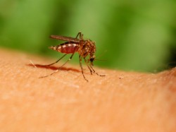 Dengue Cases Reported Country Highest Kerala