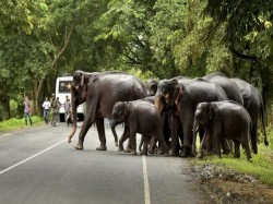 Wild Elephants Went Back The Forest Palakkad