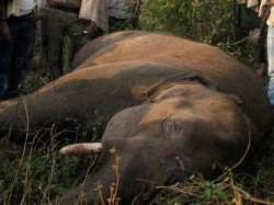 Elephant Died In Munnar