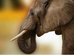 Wild Elephant Attack In Chinnakkanal