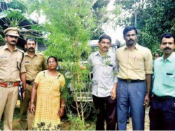 Excise Seized Marjiuana Arrested Woman Grandson From Wayanad